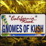 Gnomes of Kush